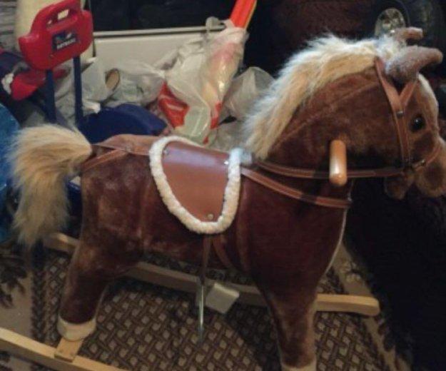 Качалка лошадь. Фото 3. Москва.