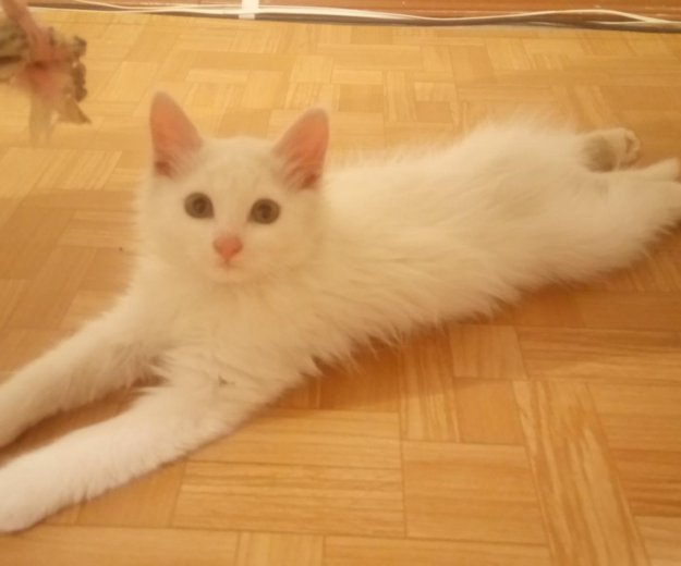 Кот. Фото 1. Тольятти.
