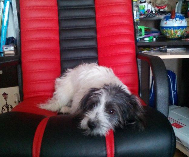 "Собака по кличке ""зуммер"" . Фото 1. Тосно."