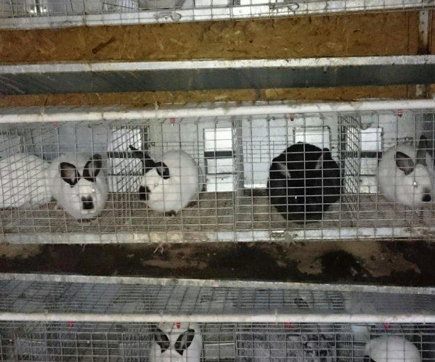 Кролики. Фото 2. Мытищи.