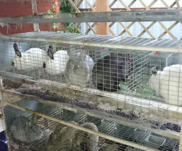 Кролики. Фото 4. Мытищи.