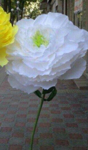 Гигантские цветы для фотосессии. Фото 2. Краснодар.