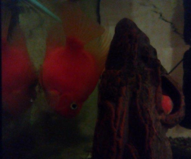 Аквариум с рыбками. Фото 2.