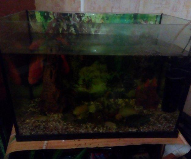Аквариум с рыбками. Фото 3.