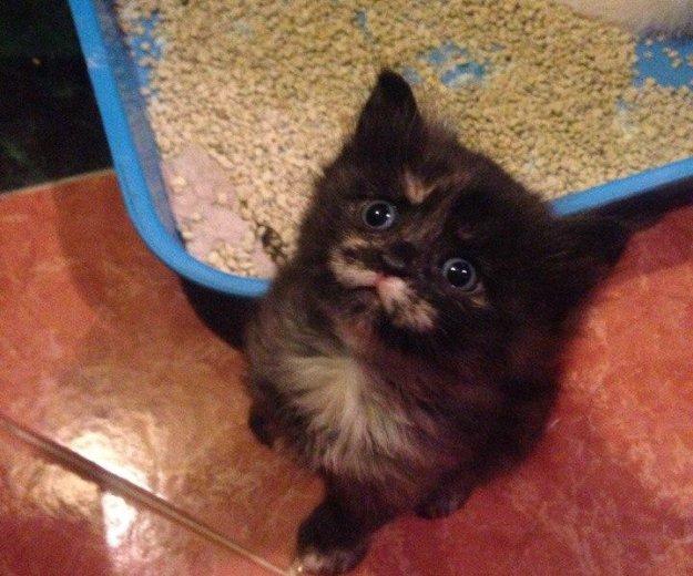 Котенок девочка. Фото 1. Новороссийск.
