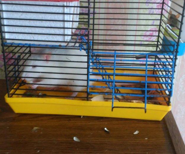 Клетка с крысой. Фото 1.