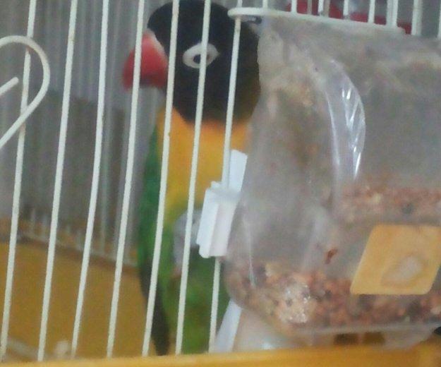 Попугай с клеткой девочка. Фото 2. Энгельс.
