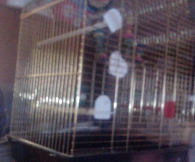 Попугай в большой клетке. Фото 1. Новый Уренгой.