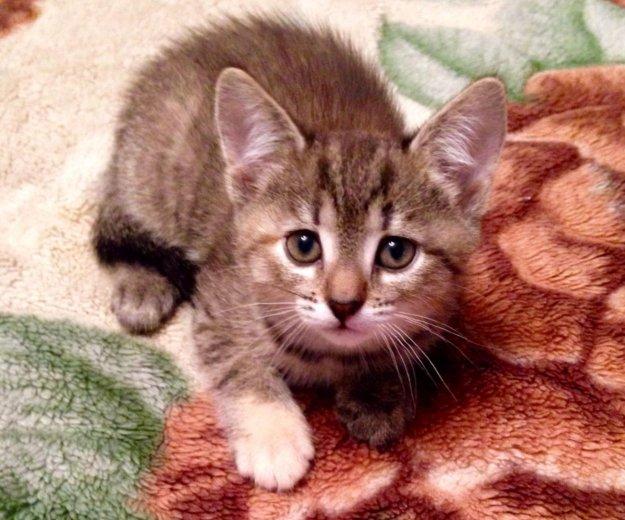 Котёнок в добрые руки. Фото 2. Москва.