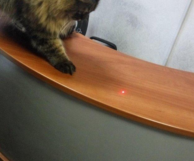 Отдам кота. Фото 4.