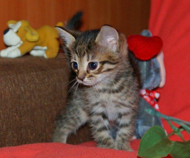 Котятки в добрые руки. Фото 3. Балашиха.