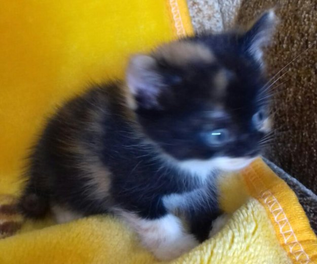 Котята. Фото 2.