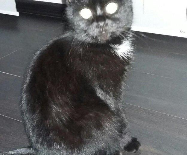 Кот. Фото 2.