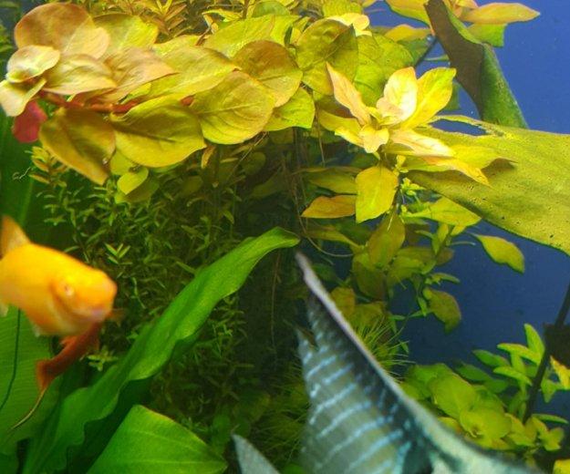 Аквариумные растения. Фото 3. Краснодар.