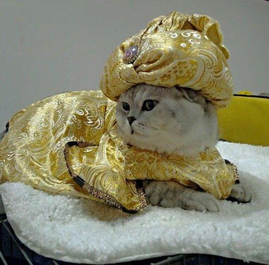 Вязка,ждём невест. Фото 4. Черкесск.