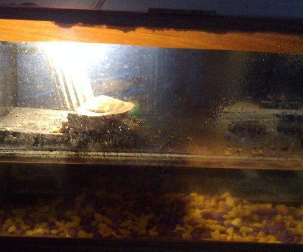 Красноухая черепаха + аквариум. Фото 4. Шебекино.