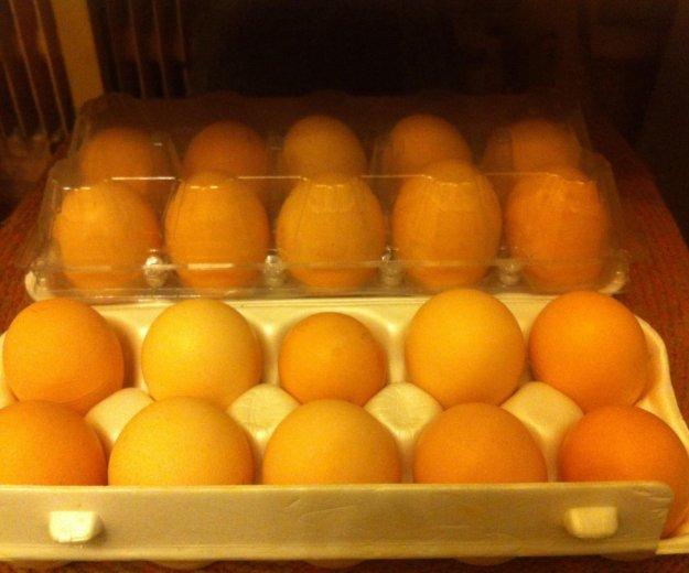 Яйца куриные деревенские. Фото 1. Калуга.