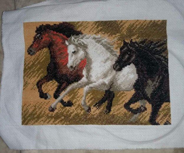 Лошади. Фото 1. Краснодар.