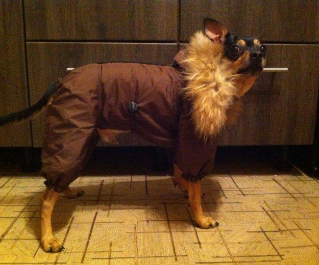 Зимний костюм для собак🐶. Фото 2. Тольятти.