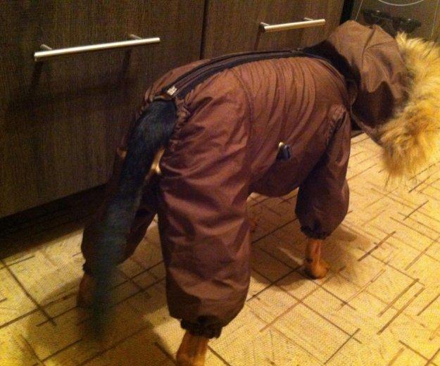 Зимний костюм для собак🐶. Фото 3. Тольятти.