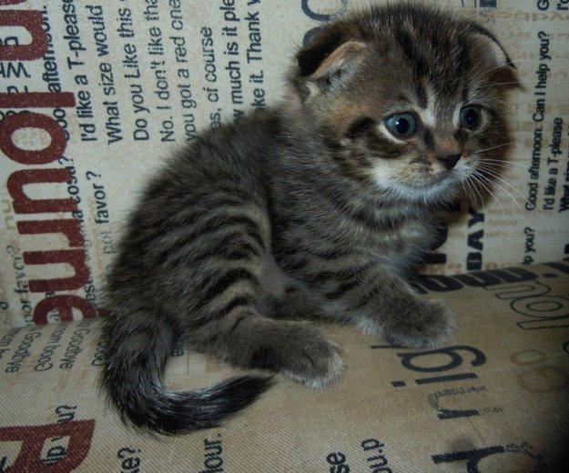 Котята. Фото 1. Энгельс.