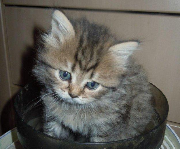 Котята. Фото 2. Энгельс.