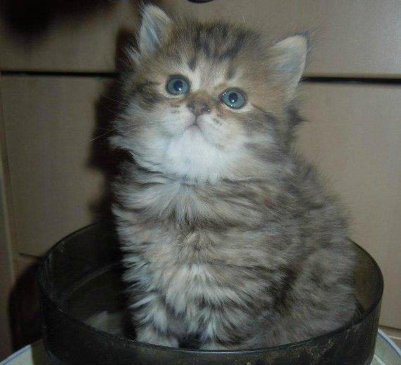 Котята. Фото 3. Энгельс.