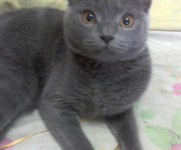 Кот для вязки. Фото 1. Тюмень.