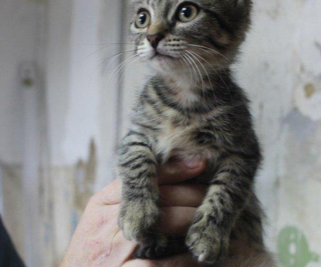 Котята кошечки. Фото 1.