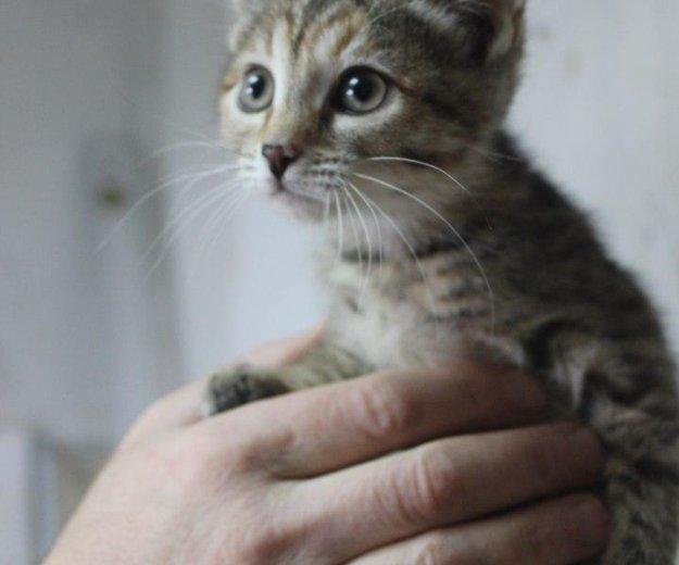 Котята кошечки. Фото 2.