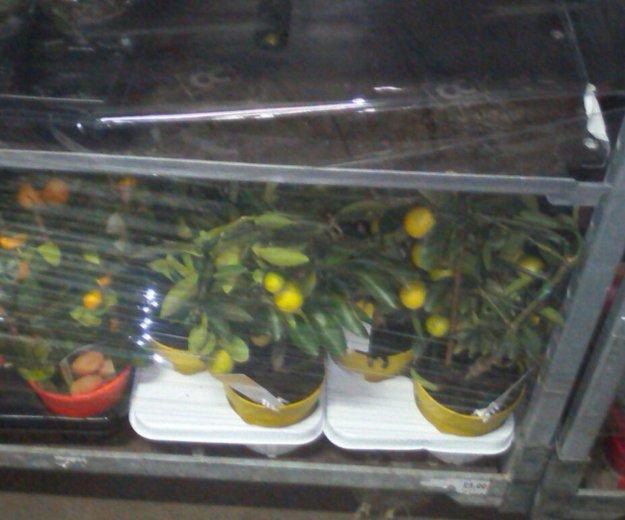 Орхидеи. Фото 3. Москва.