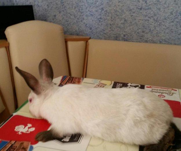 Кролики калифорния. Фото 3. Ставрополь.