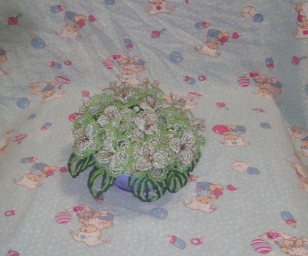 Фиалка. Фото 1. Михайловск.