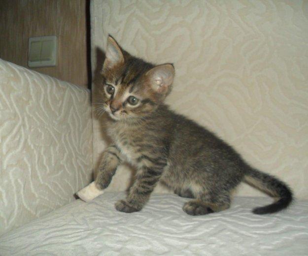 Супер котёнок- лучший подарок к новому году!. Фото 1. Обнинск.