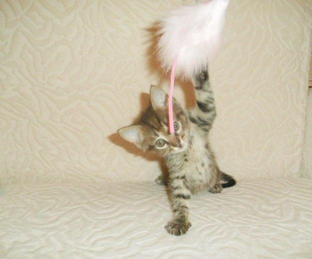 Супер котёнок- лучший подарок к новому году!. Фото 2. Обнинск.