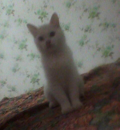 Котёнок. Фото 1. Холмская.