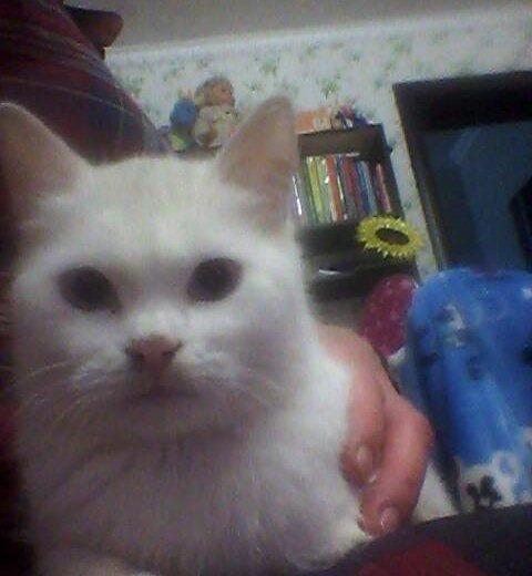 Котёнок. Фото 3. Холмская.
