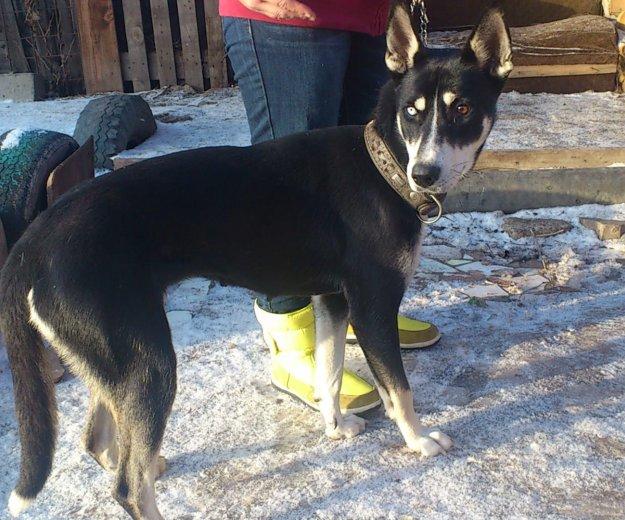 Нужны новые хозяева брошеной в лесу собаке. Фото 2. Нижний Новгород.