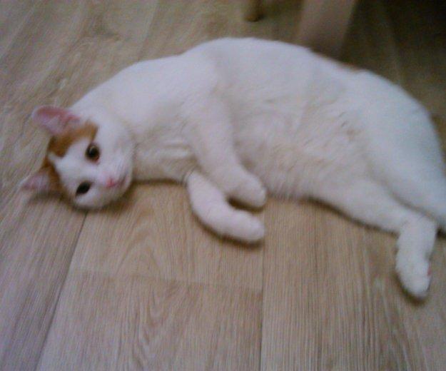 Рыжий котейко.. Фото 1. Тюмень.