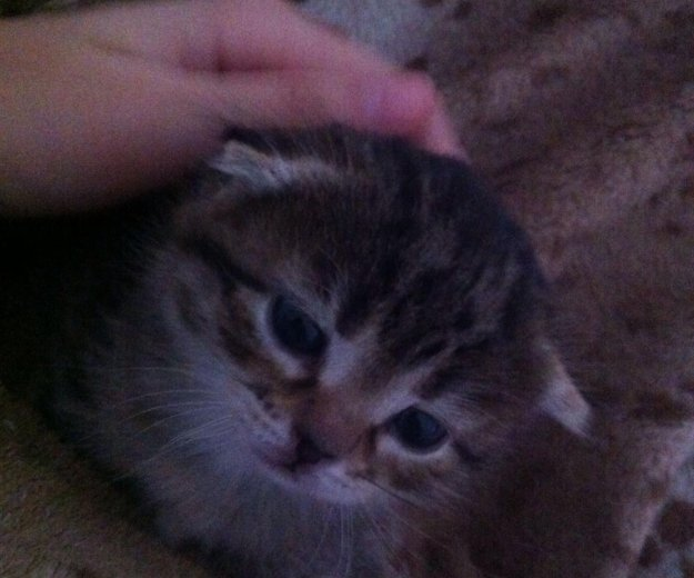 Котёнок. Фото 1. Бор.