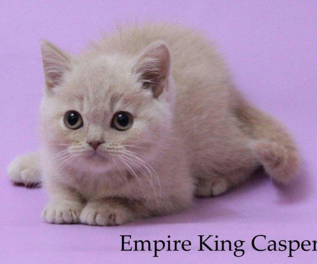 Британские плюшевые котята. Фото 2. Нижний Тагил.