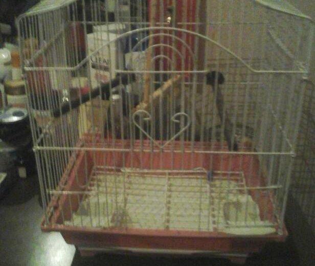 Клетка для папугаев гатов обменять на папугая любо. Фото 1. Санкт-Петербург.