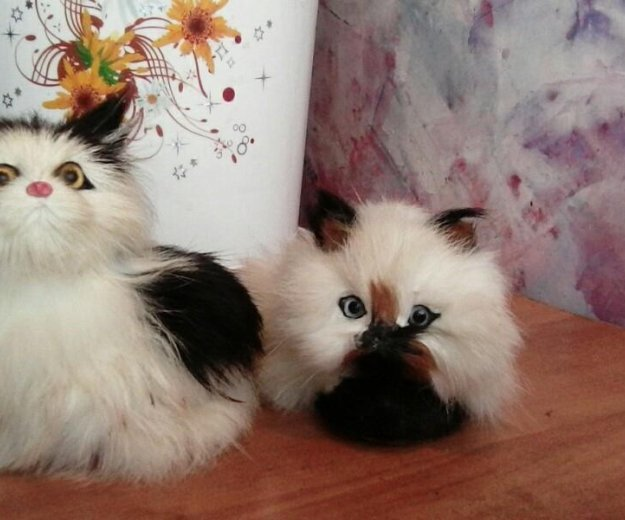 Кошечки. Фото 1. Курск.