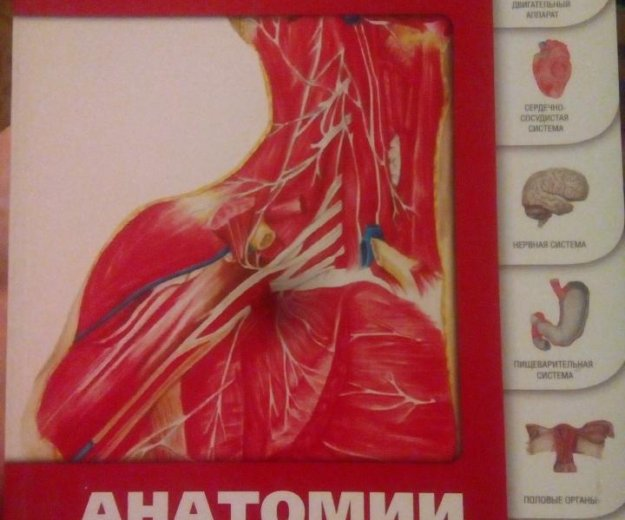 Анатомический учебник. Фото 1. Екатеринбург.