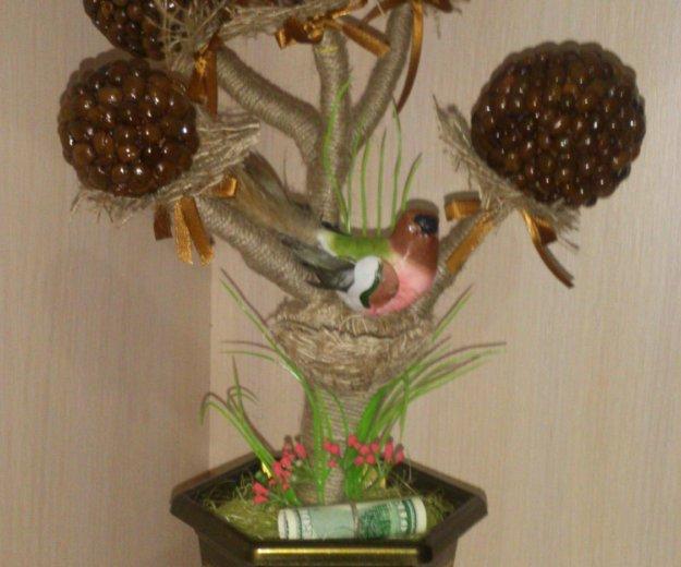 Топиарии. кофейное дерево.. Фото 2. Ессентуки.