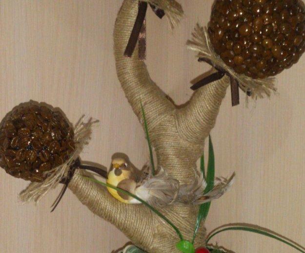 Топиарии. кофейное дерево.. Фото 3. Ессентуки.