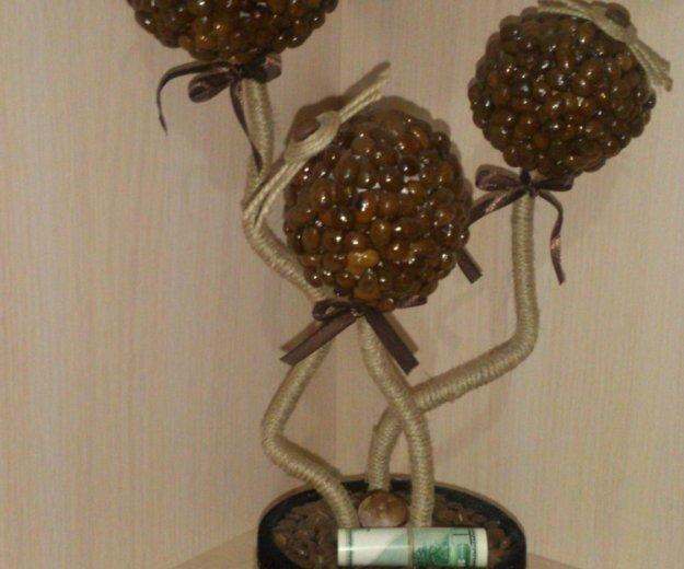 Топиарии. кофейное дерево. Фото 2. Ессентуки.