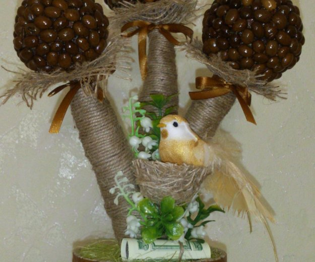 Топиарии. кофейное дерево. Фото 4. Ессентуки.