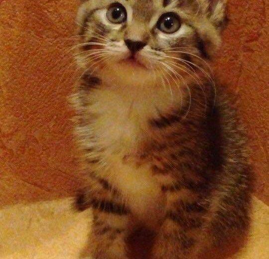 Отдам котёнка в добрые руки!. Фото 3. Москва.