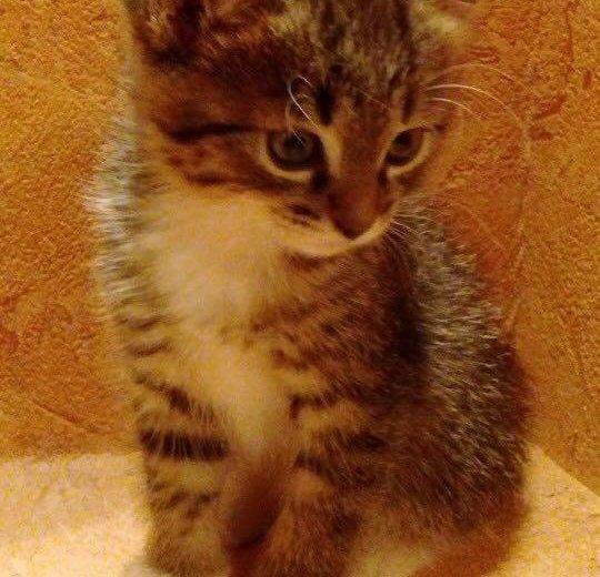 Отдам котёнка в добрые руки!. Фото 1. Москва.